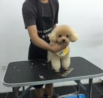 Top 3 Dịch vụ spa cho thú cưng uy tín nhất ở TP.HCM