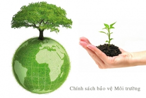 Top 4 Dịch vụ tư vấn môi trường chuyên nghiệp tại Đà Nẵng