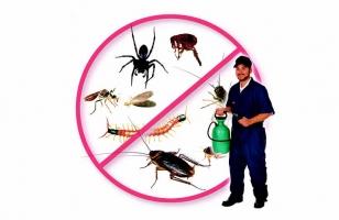 Top 6 Công ty diệt côn trùng tại nhà ở Hà Nội