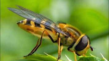 Top 6 Công ty diệt côn trùng tại nhà ở TP. Hồ Chí Minh