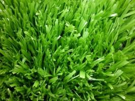 Top 6 Dịch vụ cung cấp cỏ nhân tạo giá rẻ nhất tại TP.HCM