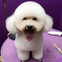 Top 6 Dịch vụ spa cho thú cưng uy tín nhất ở Hà Nội