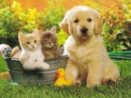 Top 7 Dịch vụ trông giữ chó mèo ngày Tết ở Hà Nội uy tín nhất