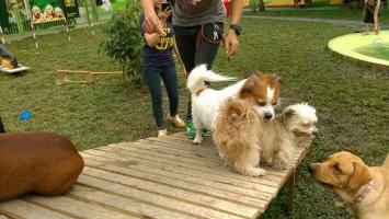 Top 7 Dịch vụ trông giữ thú cưng ngày Tết tại TPHCM uy tín nhất